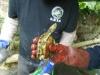 thumbs photo 2015 02 18 13 03 00 Extracción de fauna en el Llac del Parc de la Ciutadella