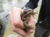 thumbs photo 2015 02 18 13 03 13 Extracción de fauna en el Llac del Parc de la Ciutadella