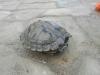 thumbs photo 2015 02 18 13 03 23 Extracción de fauna en el Llac del Parc de la Ciutadella