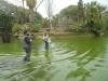 thumbs photo 2015 02 18 13 03 25 Extracción de fauna en el Llac del Parc de la Ciutadella
