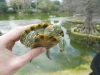 thumbs photo 2015 02 18 13 03 37 Extracción de fauna en el Llac del Parc de la Ciutadella
