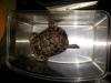 thumbs img 20120713 182000 Galería fotográfica del I Seminario Práctico de Veterinaria de Reptiles