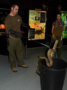 david serp5 224x300 Ponencia de David Martí Sancho en la I Jornada de Herpetos Venenosos   Manipulación de Serpientes Venenosas.