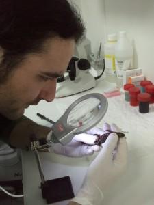 raul vidal 225x300 Ponencia de Raúl Vidal Alcaraz en la I Jornada de Herpetos Venenosos – Enfermedades virales y de alto contagio en colecciones de serpientes venenosas.