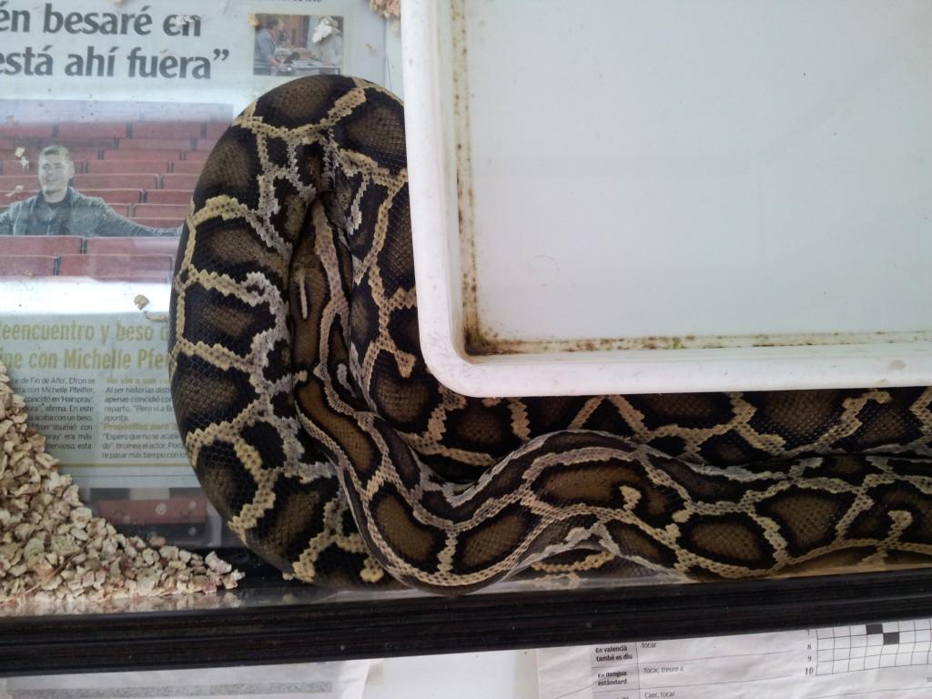 IMG 20120531 114250 1024x768 Python molurus para adoptar