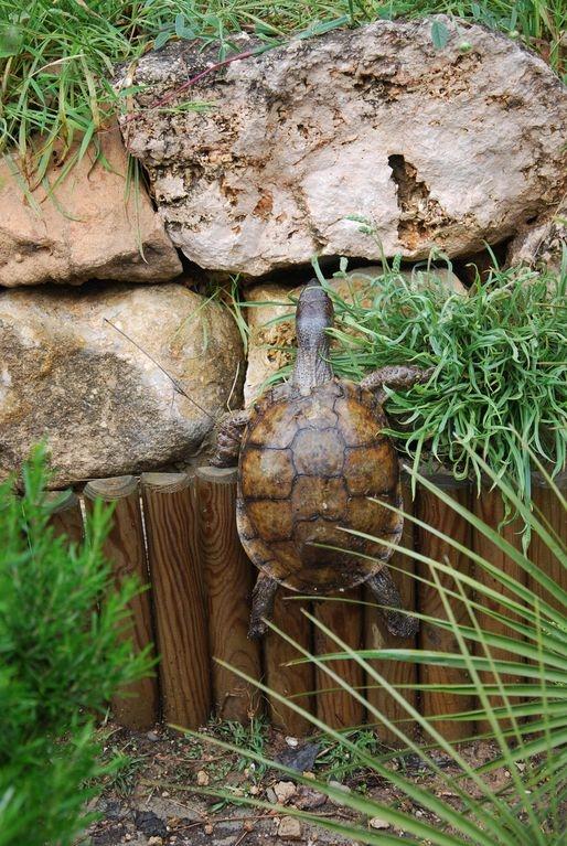 tortuga trepadora Feliz Día Mundial de la Tortuga