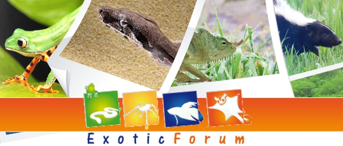 destacada_exotic
