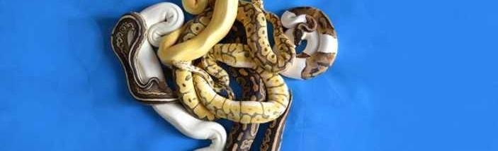 destacada_python