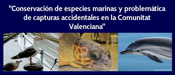 destacada_marinas14