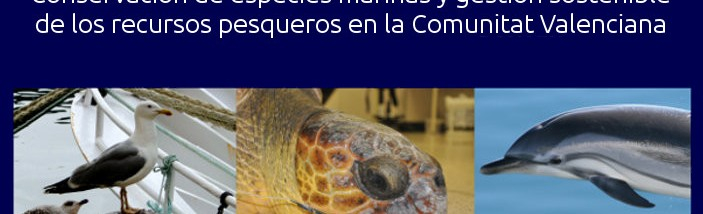 destacada_marinas28