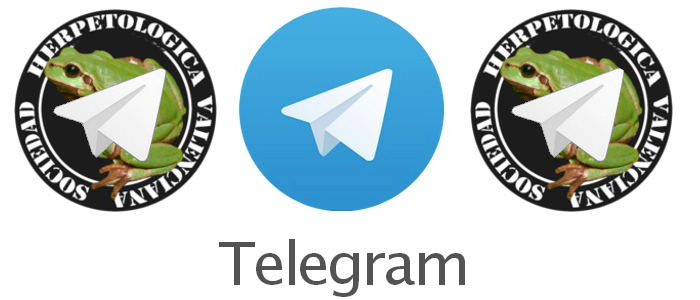 destacada_telegram