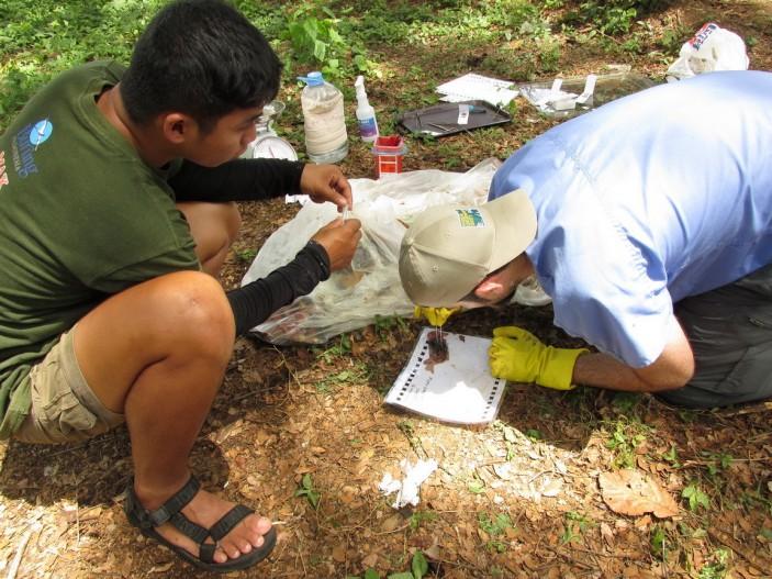 Las heces también deben ser examinadas 703x527 Avances en Palawan