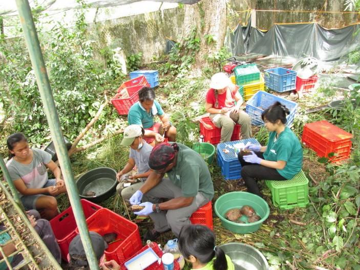 Los equipos veterinarios han recibido la ayuda de la población local 703x527 Avances en Palawan