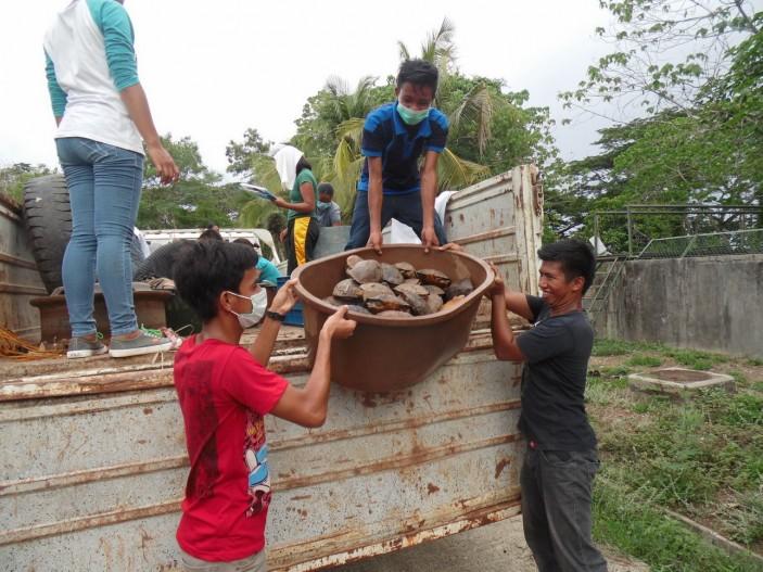 Varios camiones cargados de tortugas 703x527 Avances en Palawan