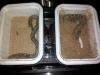 thumbs img 20120713 181832 Galería fotográfica del I Seminario Práctico de Veterinaria de Reptiles