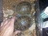thumbs img 20120713 182141 Galería fotográfica del I Seminario Práctico de Veterinaria de Reptiles